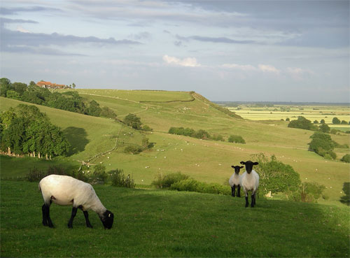 Stone-Cliff-3-Sheep