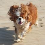 Dog-friendly-Self-catering-Rye