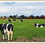 honeychild-farm-bnb-near-Rural-Rye